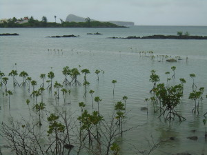 18-04-CM2C-KAYAK-mangrove