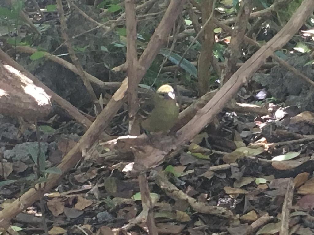 2019-classe-dd-tortue-pigeon (6)