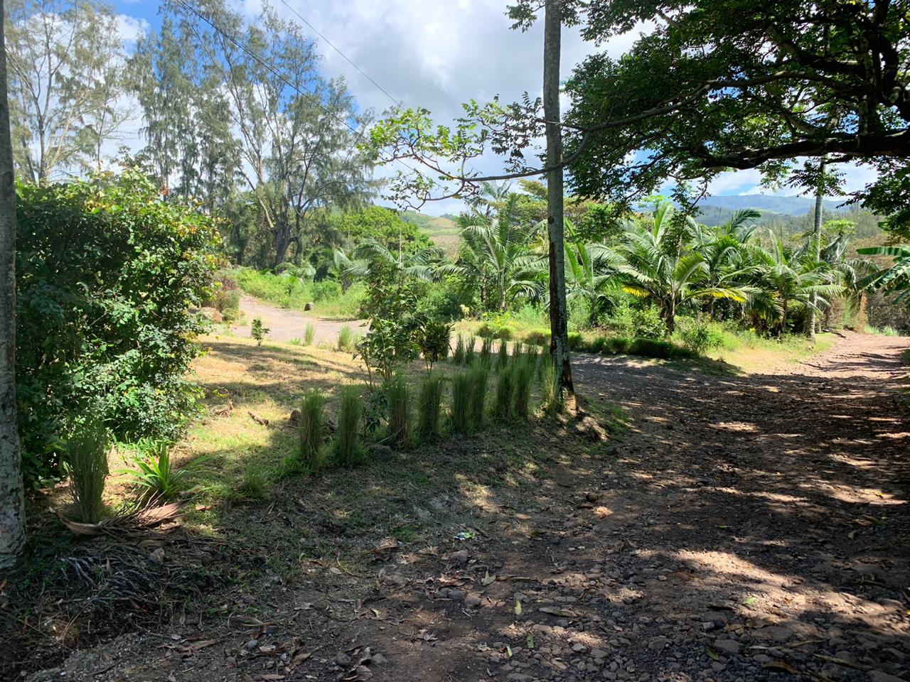 2019-29-11-cm1b-assiette-palmiste (63)