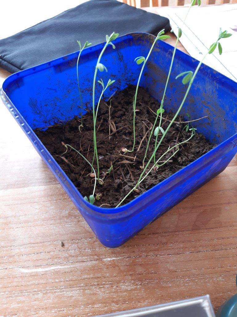 220-05-projet-plantation (1)