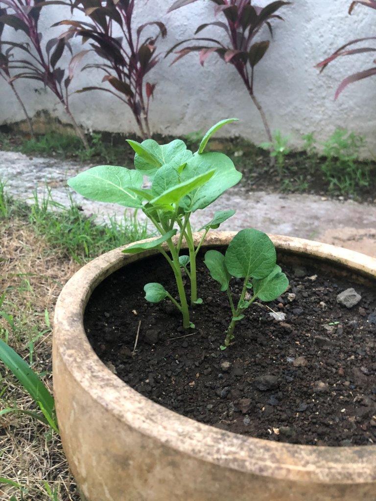 220-05-projet-plantation (4)
