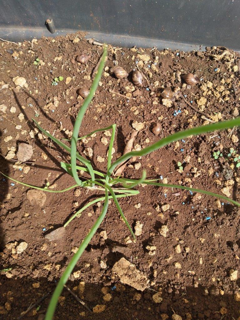 220-05-projet-plantation (7)