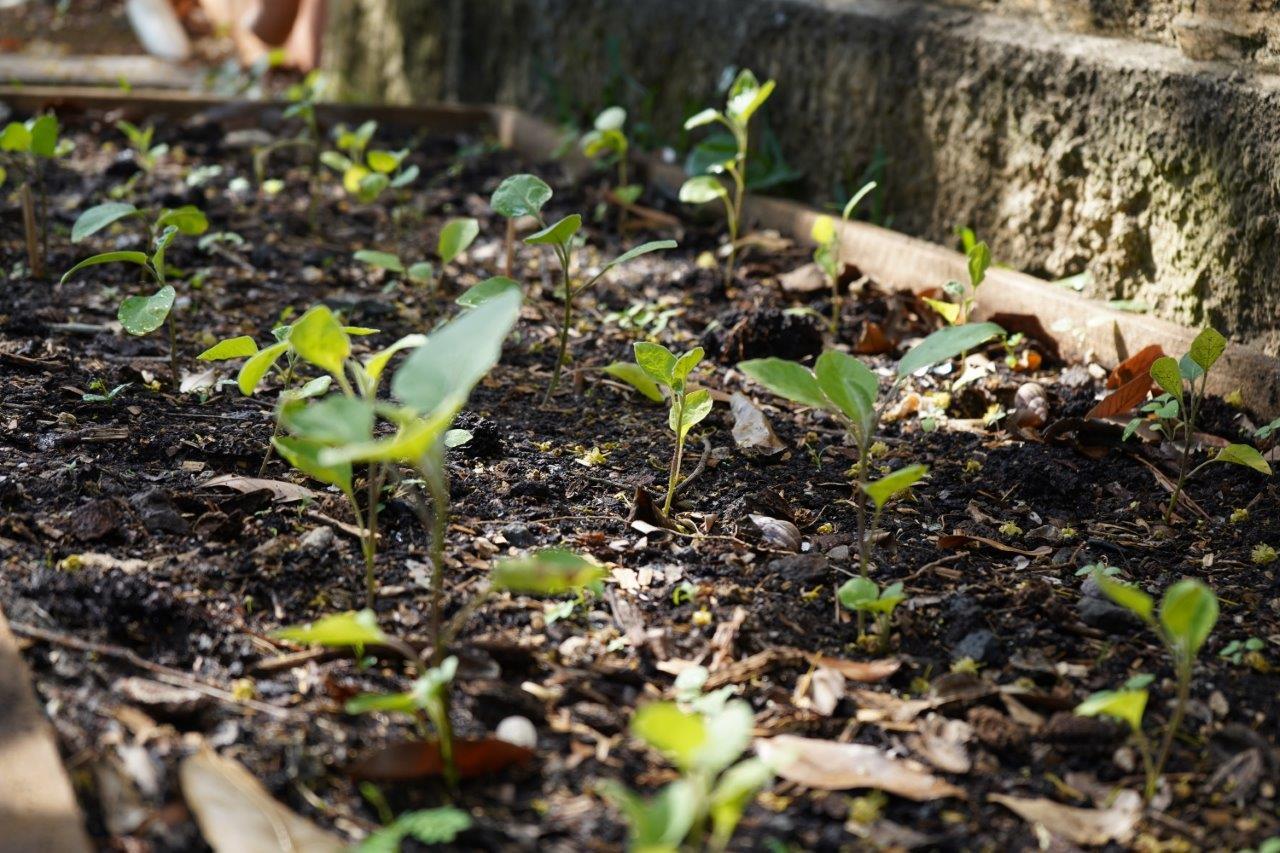 2020-gardening (1)