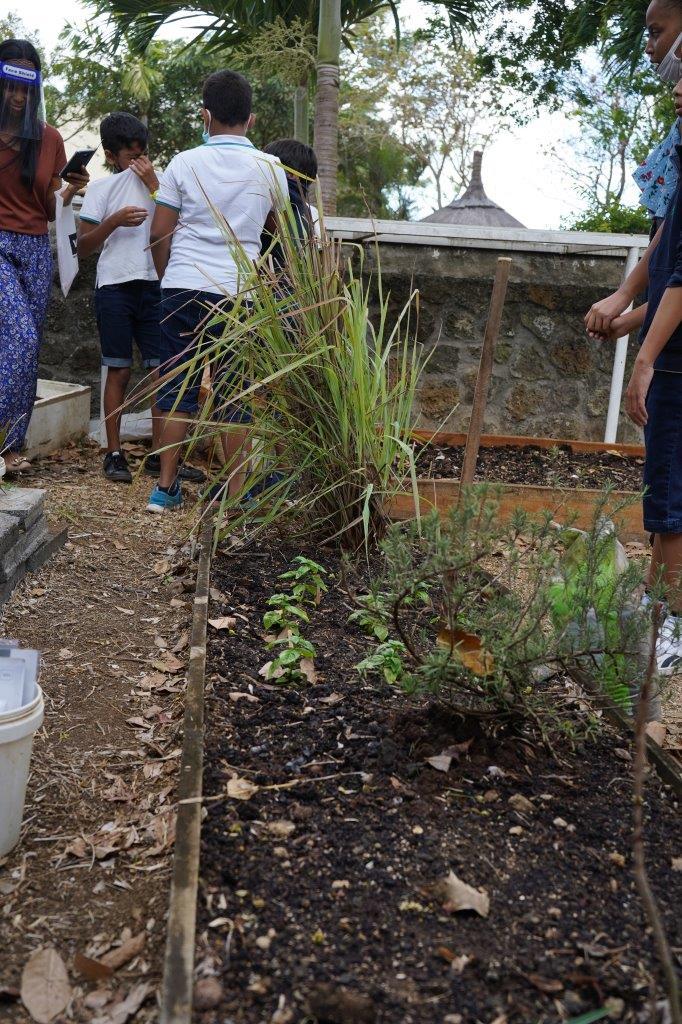 2020-gardening (28)
