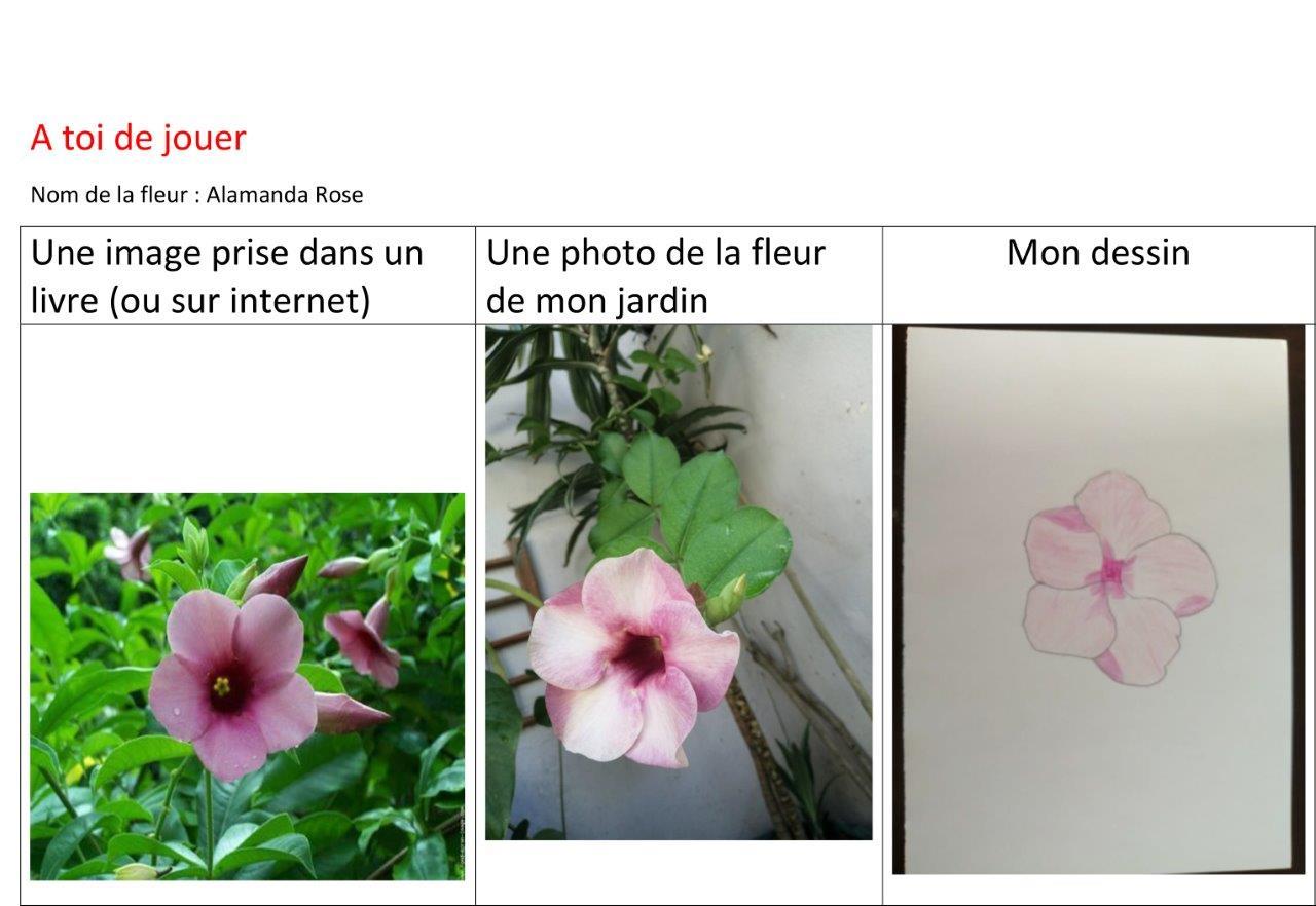 2021-04-explore-fruits-fleur (4)